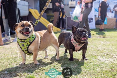 Bondi Dog Day