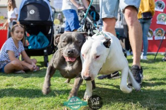20190518_Bondi_Dog_Day_9199_63_63.jpg