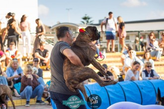 20190518_Bondi_Dog_Day_9516_136_130.jpg